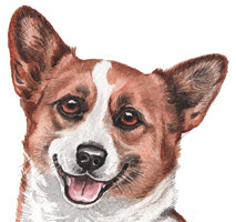 Corgi Watercolour Dog Picture