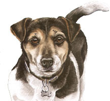 Jack Russel Watercolour Dog Portrait