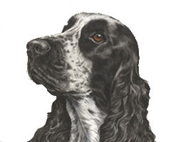 Cocker Spaniel Painting